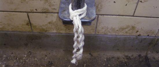Cuerda de algodón para toma de muestras