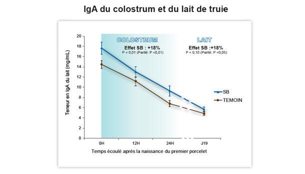 Les défenses du porcelet dans les premiers jours de vie dépendent de la quantité de colostrum ingéré et de la teneur en IgG de ce dernier