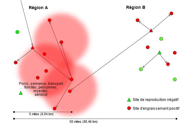 Dissémination d'une nouvelle souche de virus SDRP dans la région A