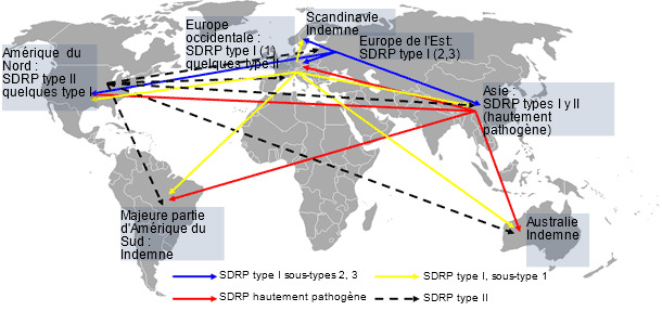 Distribution mondiale du SDRP et transmission intercontinentale hypothétique