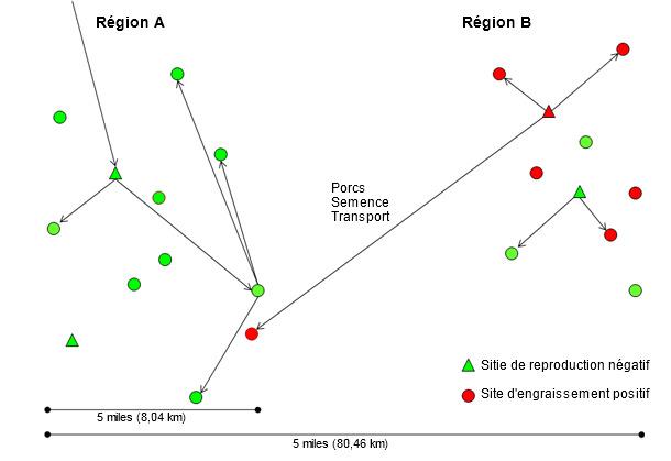 Introduction d'une nouvelle souche de virus SDRP de la région B vers la A