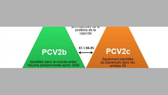 Principaux génotypes du PCV2