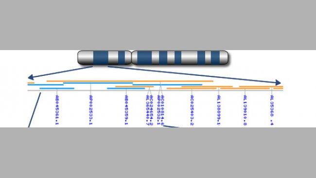 De cromosomas a genes a nucleótidos