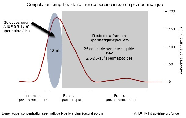 Un éjaculat type de verrat présente 3 fractions différentes dépendant, parmi d'autres paramètres, de la concentration spermatique (représentée ici avec une ligne rouge)