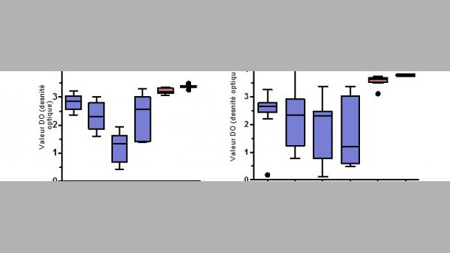 Niveaux d'anticorps IgG spécifiques pour le PCV2 mesurés par ELISA dans le sérum et le colostrum des truies.