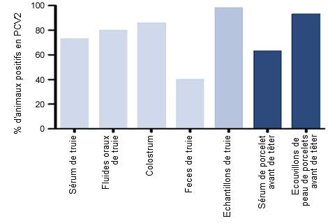 Pourcentage d'animaux positifs en ADN du PCV2