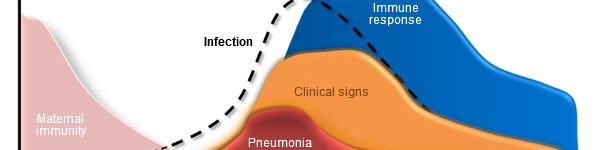 Dynamique d'infection par Mycoplasma hyopneumoniae, signes cliniques et réponse de l'hôte