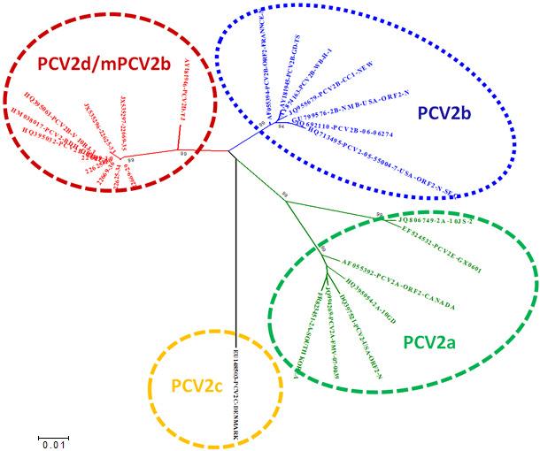 Relation entre les principaux génotypes du PCV2 sur la base de la comparaison des séquences ORF2.