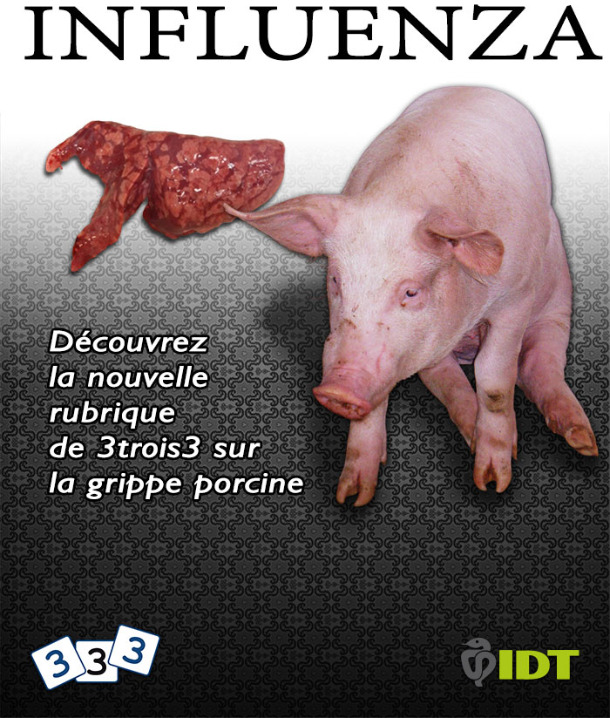 Grippe porcine