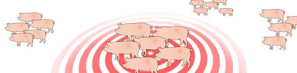 Dynamique de l'infection par le virus influenza dans les élevages de reproductrices