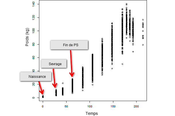 Evolution du poids vif moyen au cours du temps d'une population de 347 animaux