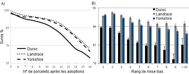 Effet du nombre de porcelets après les adoptions (A) et de l'ordre de mises-bas (B) sur la survie par race.
