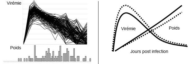 Virémie du virus SDRP (figure supérieure) et distribution du GMQ (inférieure) sur 200 porcs infectés expérimentalement avec le virus SDRP.