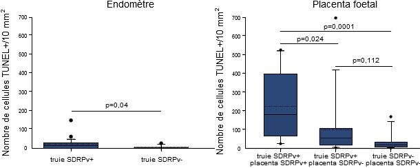 Quantification des cellules apoptotiques