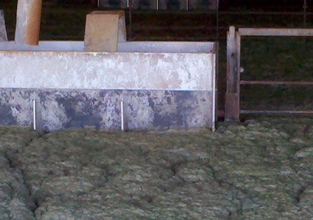 Ecume dans la zone occupée par les animaux dans un engraissement avec une fosse à lisiers.