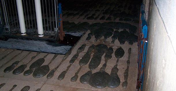 Ecume dépassant du sol des caillebotis.