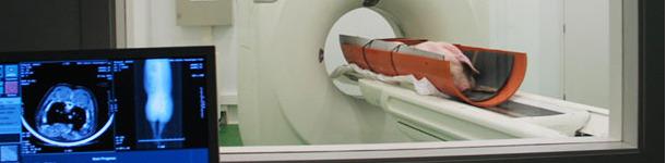 Evaluation d'un porc vivant avec un équipement de tomographie numérique