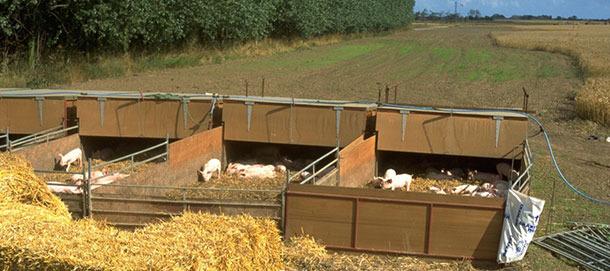 Nids en plein-air où sont logés les porcs du sevrage jusqu'à 9 semaines de vie.
