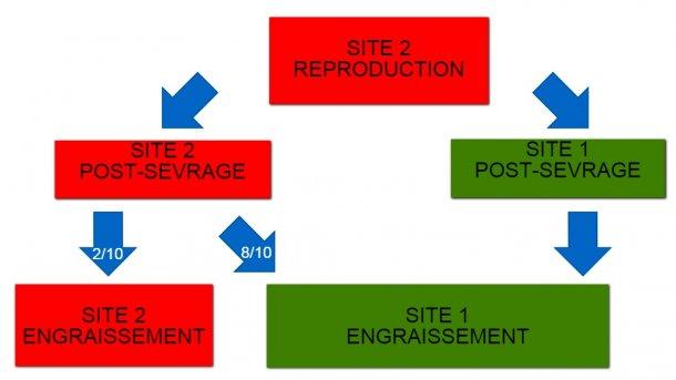 Figure 1: Schéma des deux sites de production et du flux des animaux