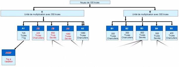 Figure 1. Structure de l'entreprise - Tous les sites en rouge ont connu de la MO clinique en 2015/16.