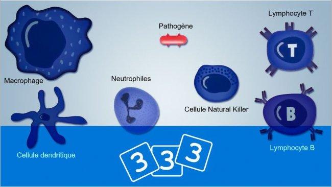 Venez redécouvrir l'immunologie chez 3trois3