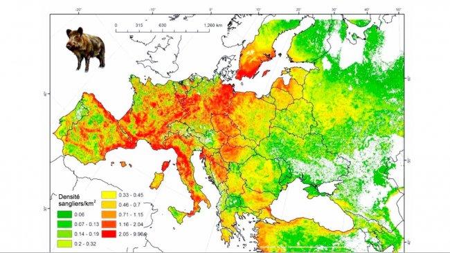 Figure 2: Population modélisée des sangliers en Europe. Source: FAO-ASFORCE, Mai 2015