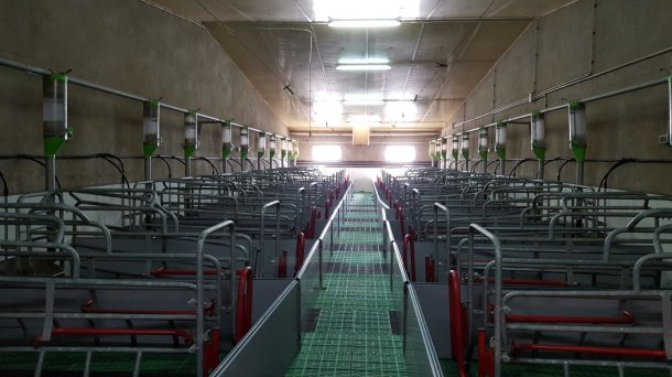 Image 1. Les maternités avec couloir derrière la cage facilitent beaucoup le contrôle de la mise-bas, le nettoyage des trains arrières et une bonne observation de la truie et du nid.