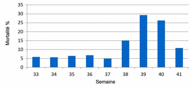 Graphique 1. Pourcentage de mortalité hebdomadaire pré-sevrage, avant et pendant l'épisode de DEP