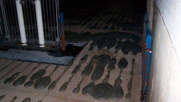 Photo 2 : Formation de mousse dans la fosse à purin.