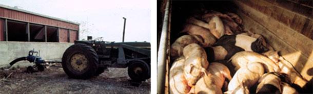 Photo 4 : Il faut faire attention pendant l'agitation ou le pompage. Dans ce cas, les employés ont survécu, mais pas les porcs.