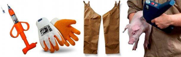 """Figure 4 : Utilisez seulement des aiguilles de la longueur nécessaire. La plupart des produits étant conçus actuellement pour l'injection intradermique, l'utilisation d'une aiguille de ¼"""" pour les porcs jeunes et de ½"""" pour les porcs plus grands est suffisante. Cela aide à prévenir les lésions accidentelles chez les employés et les dommages sur les tissus musculaires chez les porcs. Figure 5 : Plusieurs sociétés fabriquent des gants anti-piqûres. Elles assurent qu'ils sont suffisamment flexibles pour travailler, tout en protégeant en même temps. Un gant à la main non dominante doit suffire. Figure 6 : Des cuissières ou des jambières, comme celles utilisées des fois par les chasseurs, peuvent aider à prévenir les piqûres accidentelles au moment de tenir les porcs entre les jambes. Figure 7 : L'injection sans aiguille devient de plus en plus populaire dans la production porcine, ce qui cause un moindre dommage tissulaire chez les porcs et un moindre risque de piqûres accidentelles chez les employés."""