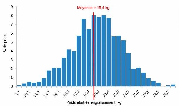 Figure 4. Distribution des poids à l'entrée en engraissement