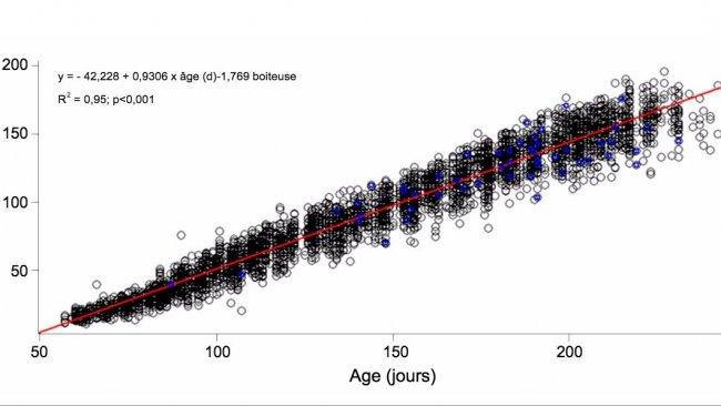 Graphique 1. Évolution du poids vif et de l'âge des nullipares boiteuses (bleu) et non boiteuses (noir)