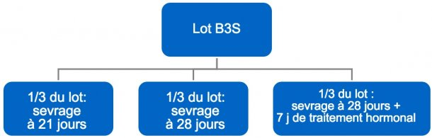 Figure 4. Processus du passage de bandes de 3 semaines (B3S) vers bandes hebdomadaires
