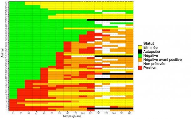 Graphique montrant la détection longitudinale de M. hyopneumoniae chez les cochettes.