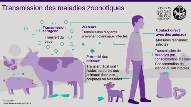 Figure 1. Voies de transmission des maladies zoonotiques. Les zoonoses sont des maladies infectieuses qui peuvent être transmises des animaux aux humains, mais également des humains aux animaux. Source : London School of Hygiene and Tropical Medicine.