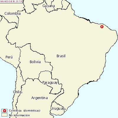 <p>PPC Brésil</p>