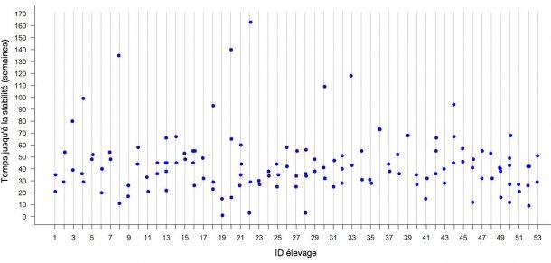 Figure 2: Temps jusqu'à la stabilité par rapport au SRRP dans chaque élevage sur 53 élevages de truies du Midwest américain. Chaque point représente le TTS observé pour chaque foyer dans un élevage donné.