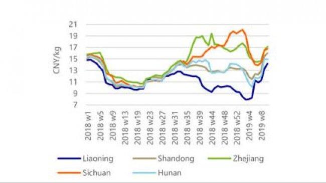 Les prix du porc régionaux convergent à mesure que les restrictions de déplacement s'assouplissent.