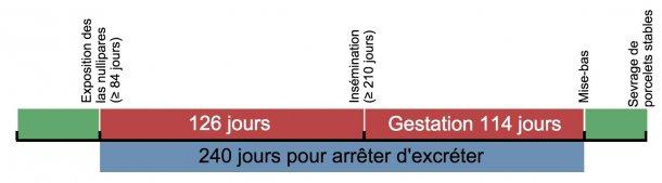 Figure 1. Échéancier d'exposition des cochettes de remplacement.