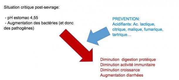 Figure 2: L'acidification du digesta est également une bonne stratégie pour améliorer la digestion, en particulier chez les porcelets en post-sevrage, car leur capacité endogène est très limitée. Grâce à l'incorporation d'un acidifiant dans l'alimentation, on évite une réduction de la digestion des protéines et des altérations de l'immunité et des paramètres de production.