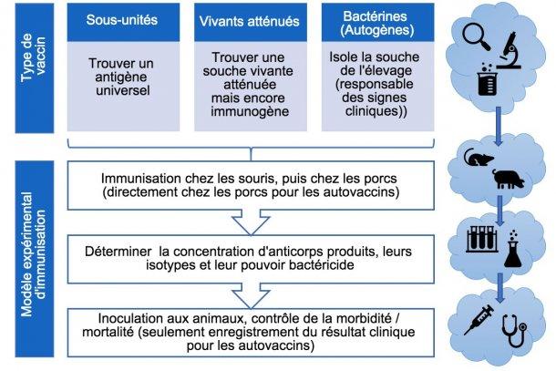 Figure 3. Etapes dans l'analyse de l'efficacité des vaccins expérimentaux (par type de vaccins).