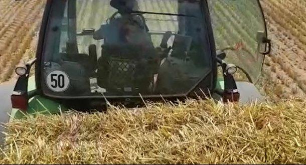 Photo 2. La paille contaminée a été soupçonnée d'être le vecteur le plus susceptible de transmettre la PPA dans l'un des foyers d'un élevage polonais.