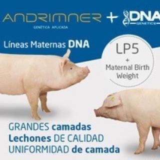 DNAbyAndrimner3