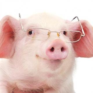 Piggy's BFF